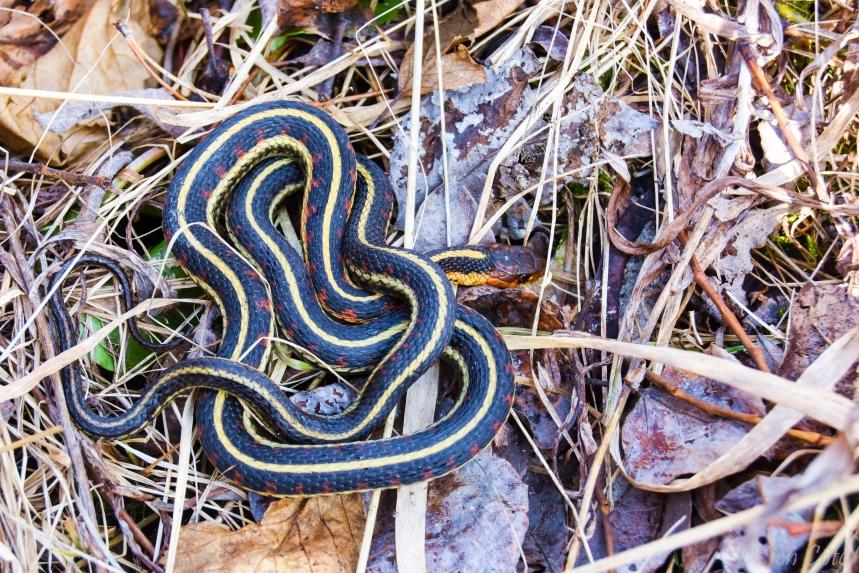 Snake 3 web