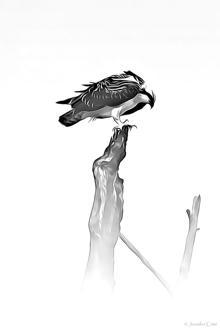 Eagles (13)