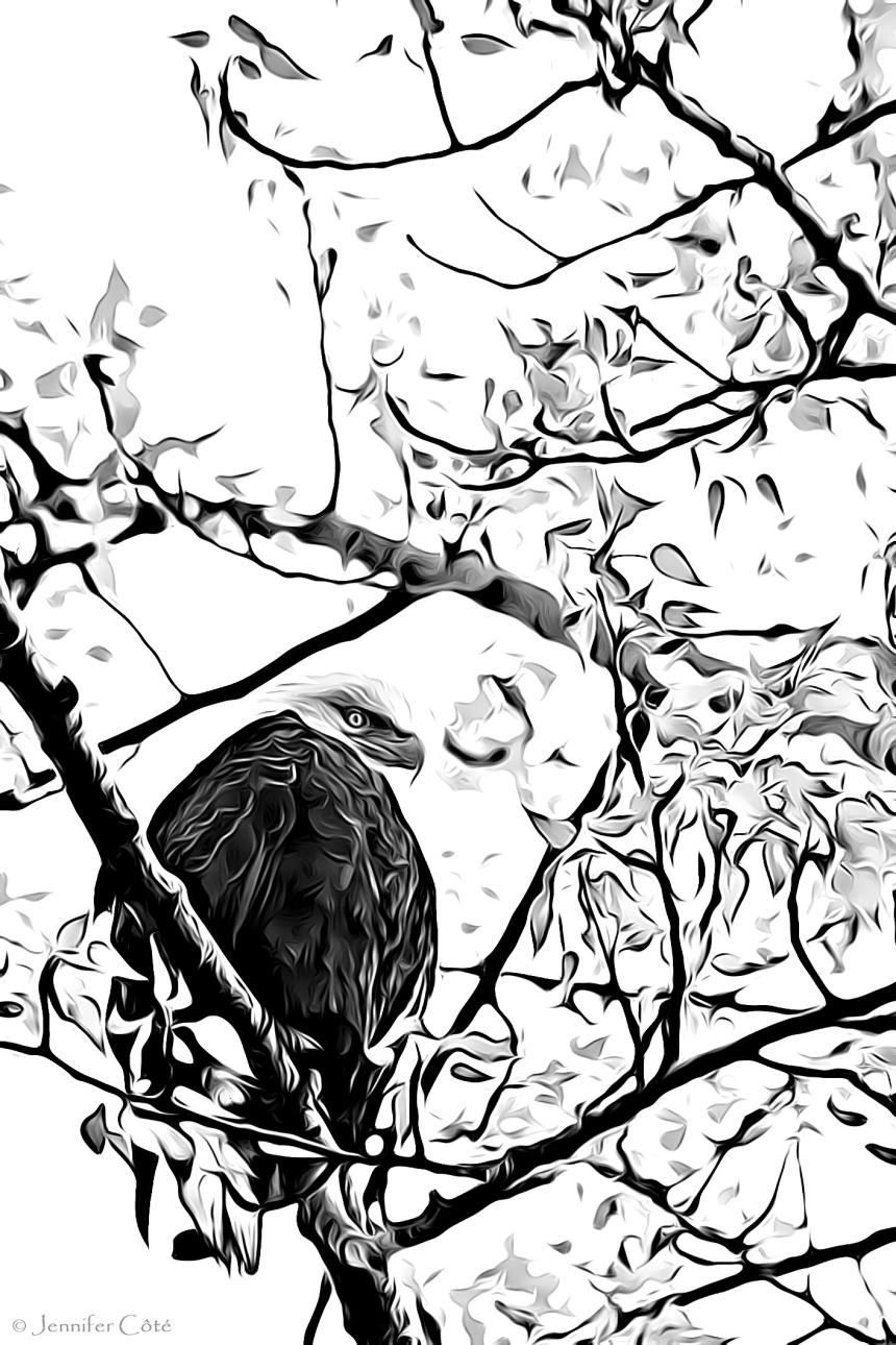Eagles (21)