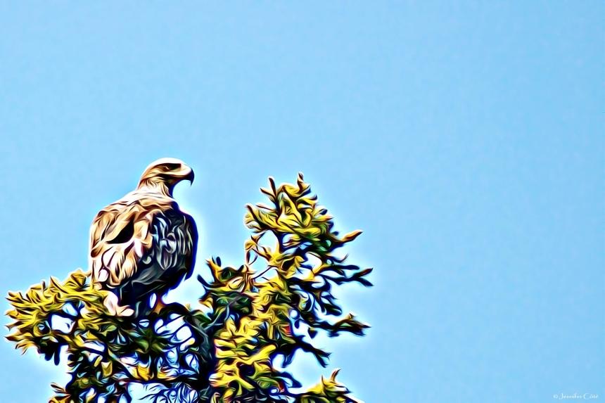 Eagles (27)