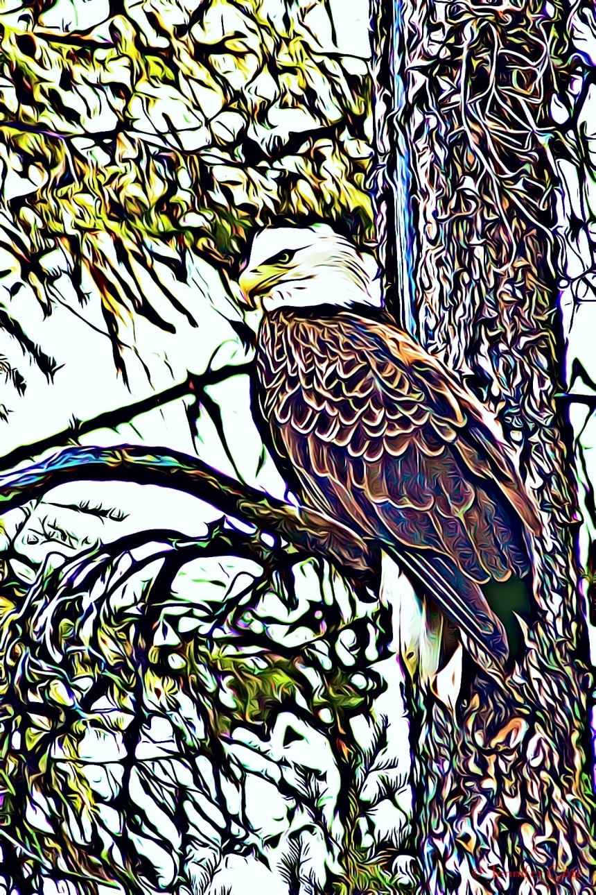 Eagles (4)