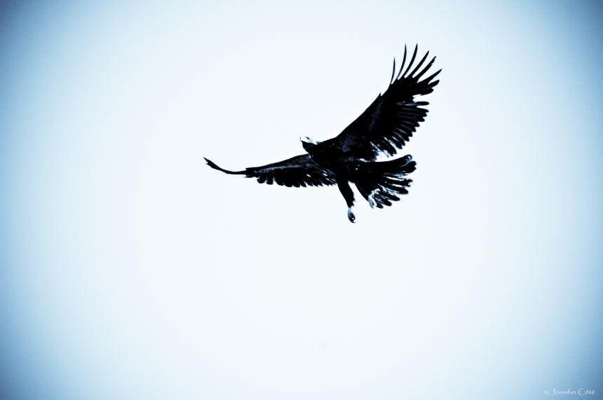 Eagles (9)