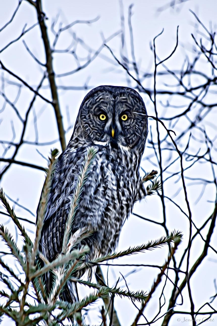 Owls (1)